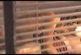 Window peeping video - a couple
